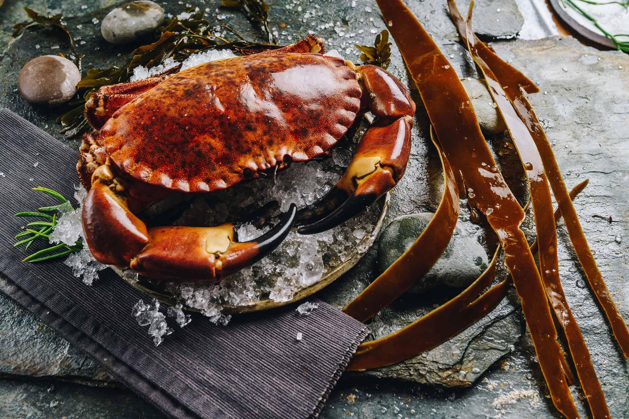 Lochfyne-Crab
