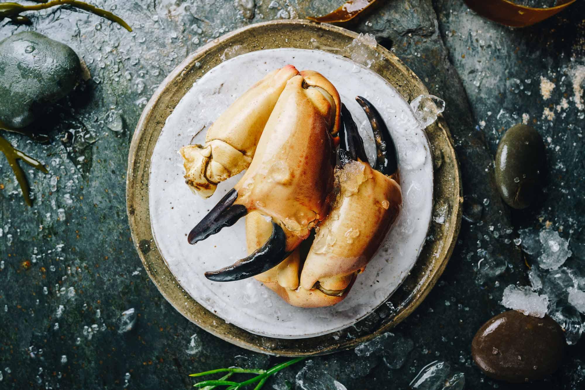 Lochfyne-Crab2